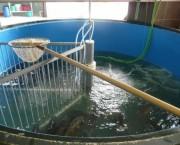 Fischbecken_web.jpg