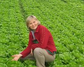 Link Gemüse